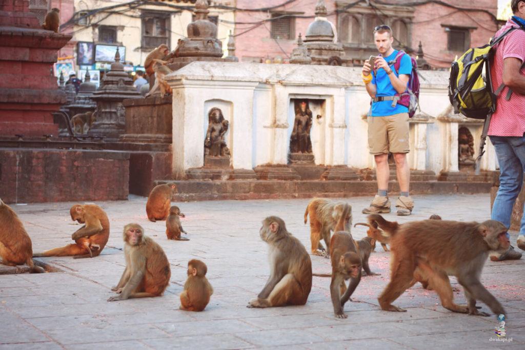 świątynia małp katmandu